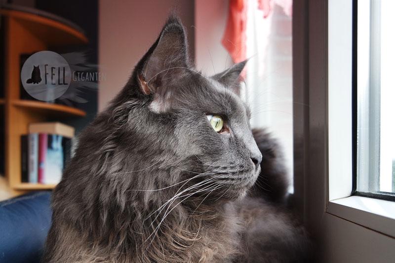 Katzenklo Größe