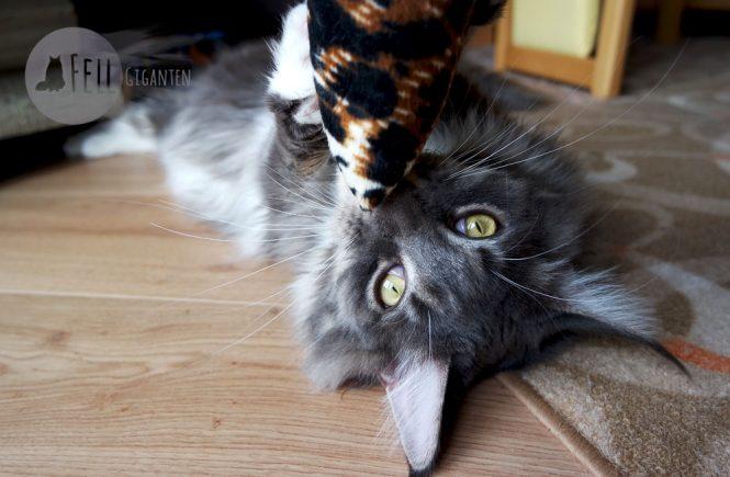 Katzen erziehen - oder erzogen werden?