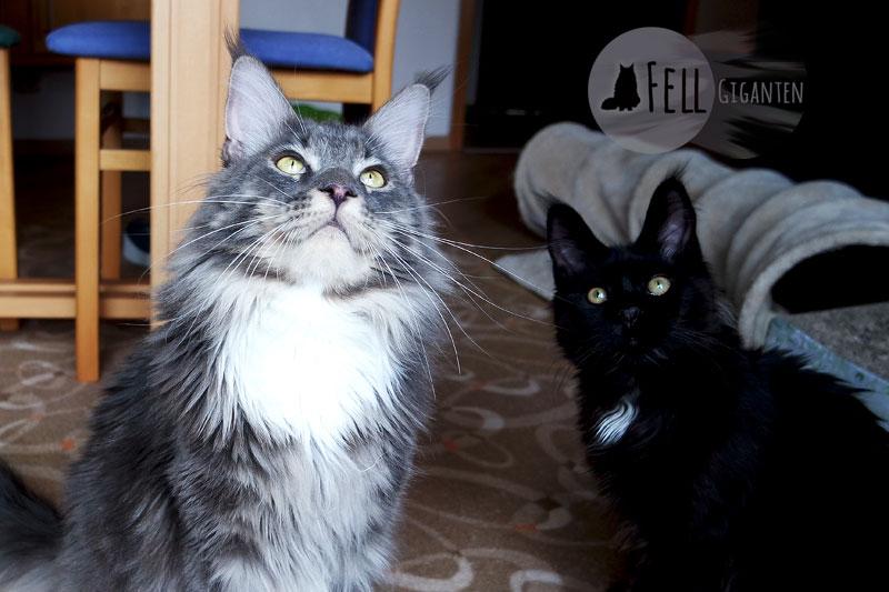 katzen erziehen oder wie miez dein leben katzengerecht. Black Bedroom Furniture Sets. Home Design Ideas