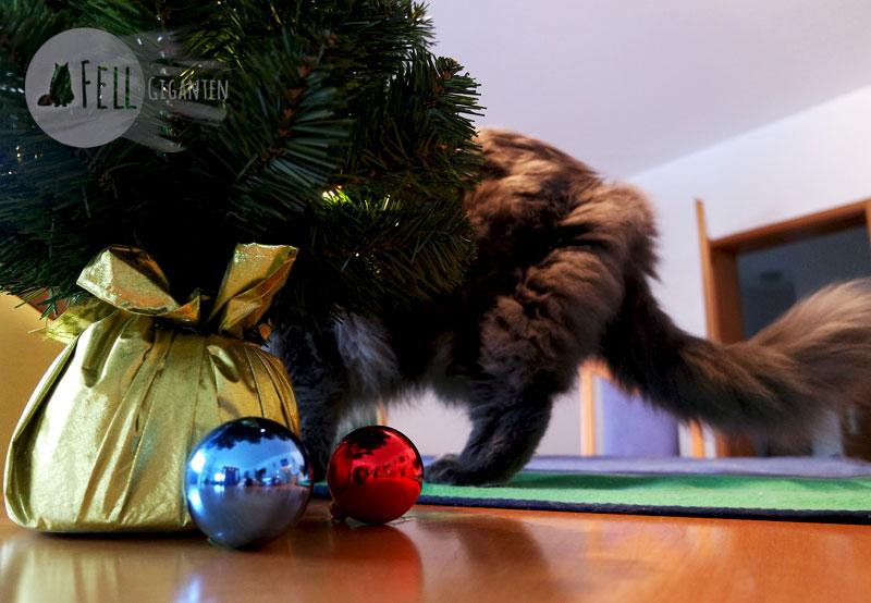Katze und Weihnachtsbaum
