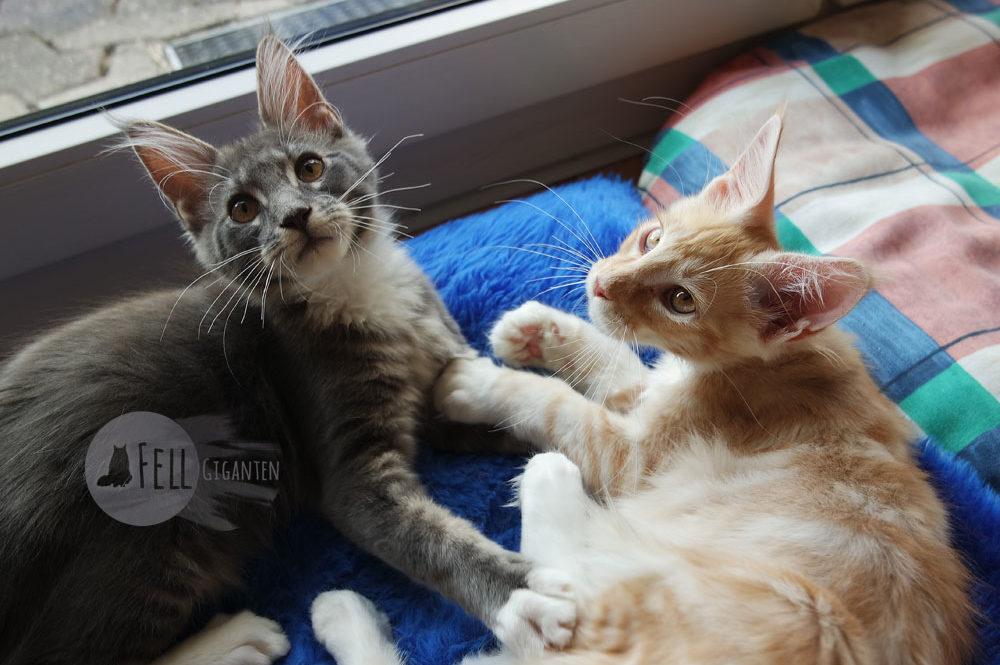 Buddy und Sonny