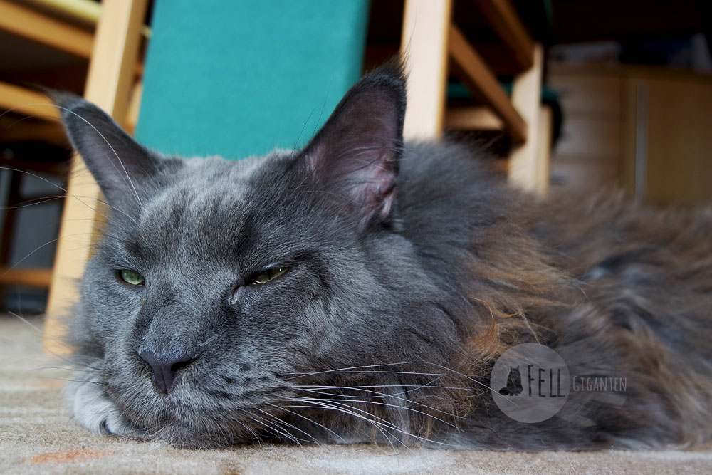Katze Appetitlosigkeit - Gefahren und Ursachen