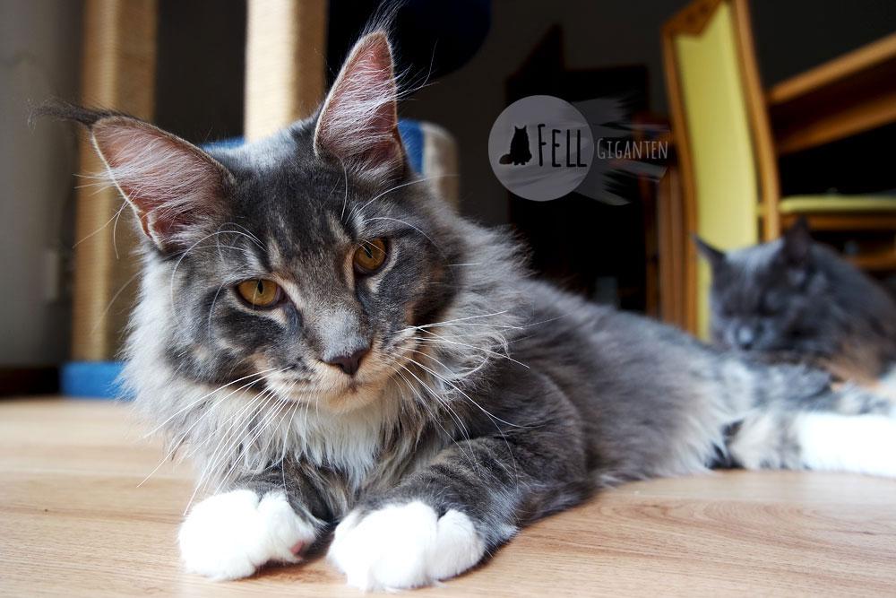 Weihnachtsgeschenke für Katzenfreunde