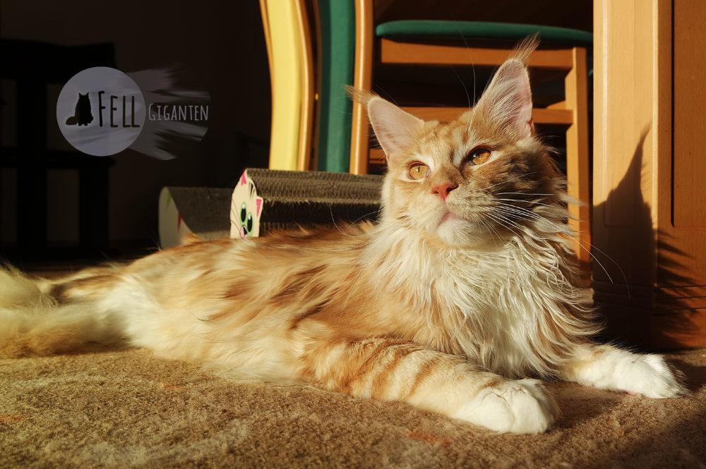 Artgerechte Katzenhaltung