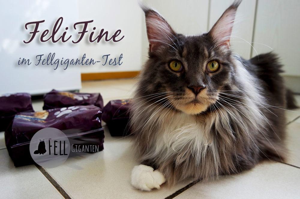 FeliFine im Fellgiganten-Test