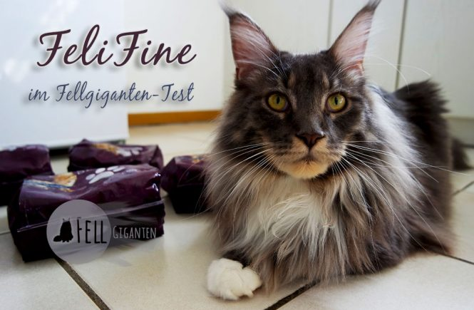 FeliFine im Fellgiganten-Test