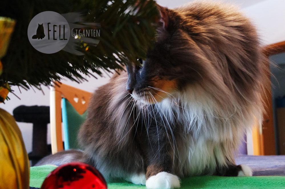 Weihnachten mit Katzen