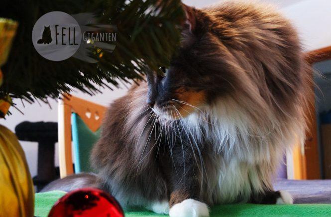 Katzensicher Weihnachten feiern