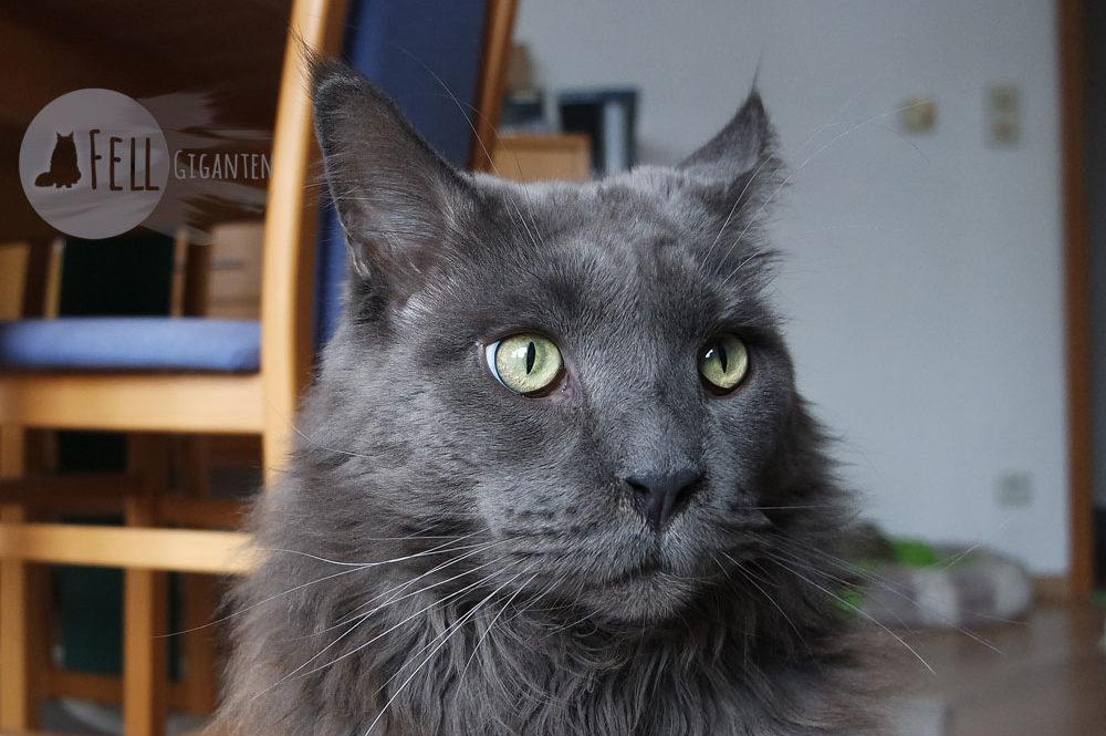 Umgang in Katzenforen