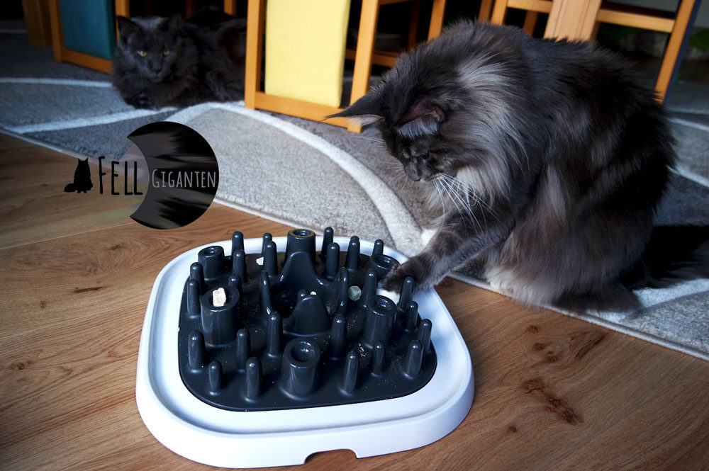 Katzen Fummelbrett Savic Quiz L