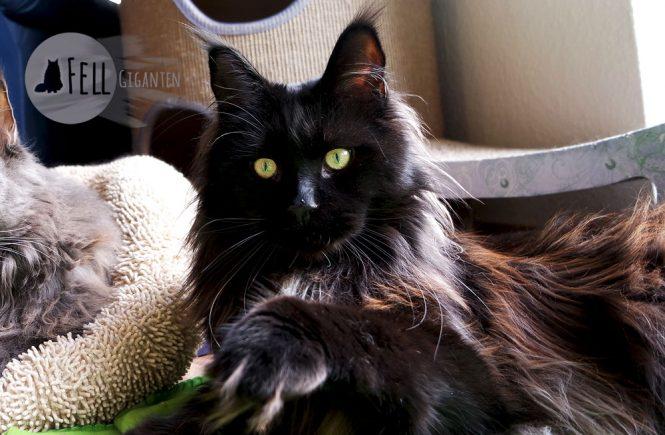 Katzen beschäftigen: Spielen!