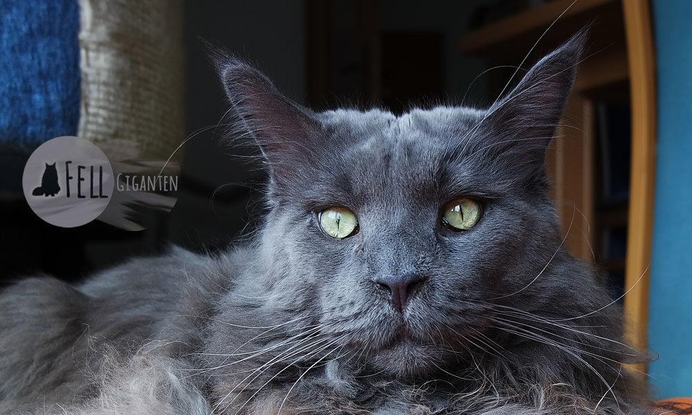 Verstopfung bei Katzen