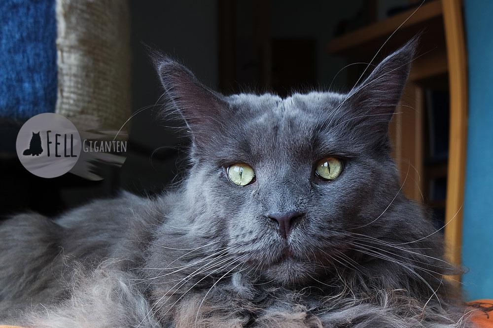 Verstopfung Bei Katzen Was Wenn Miez Nicht Zum Klo Geht