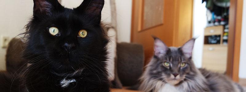 Katze Erstausstattung Liste