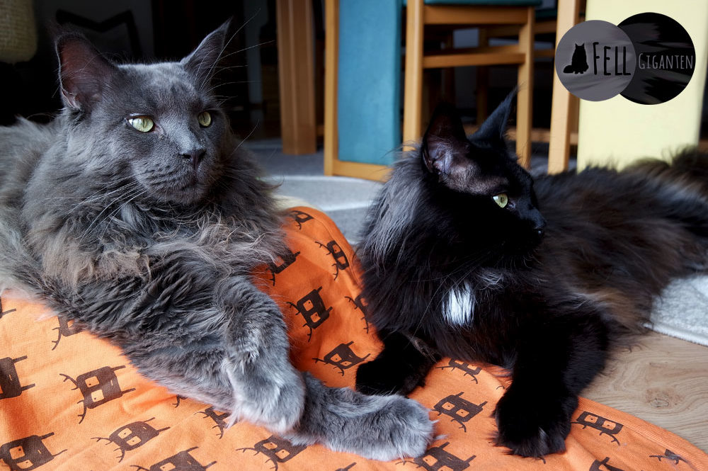 Erste Katze - oder gleich zwei?