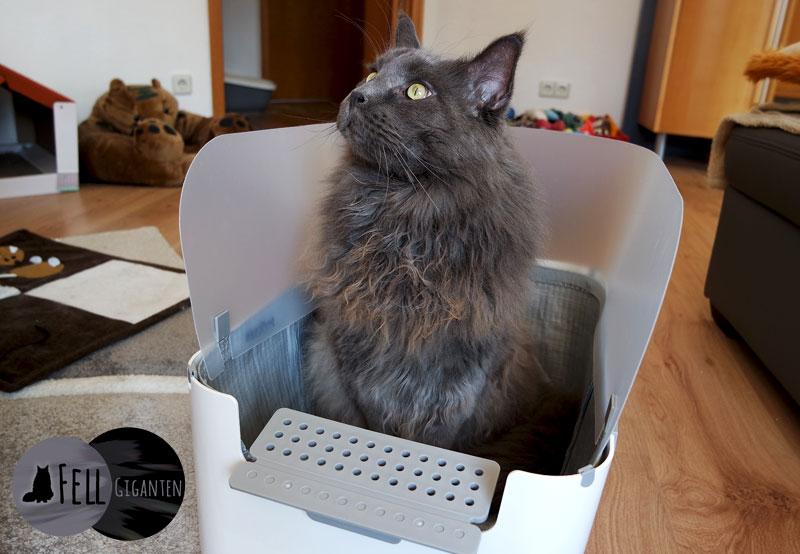 Katzenklo Vergleich