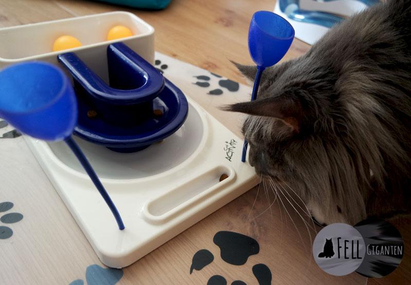 Cat Activity Fantasy Board