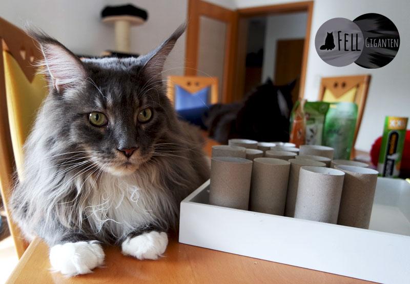DIY Adventskalender für Katzen