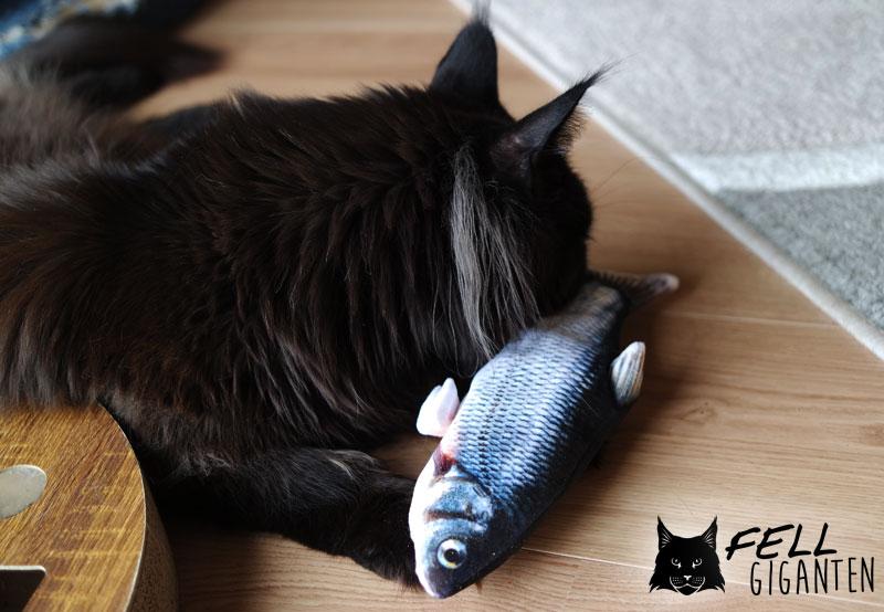 Indy checkt den Fisch ab
