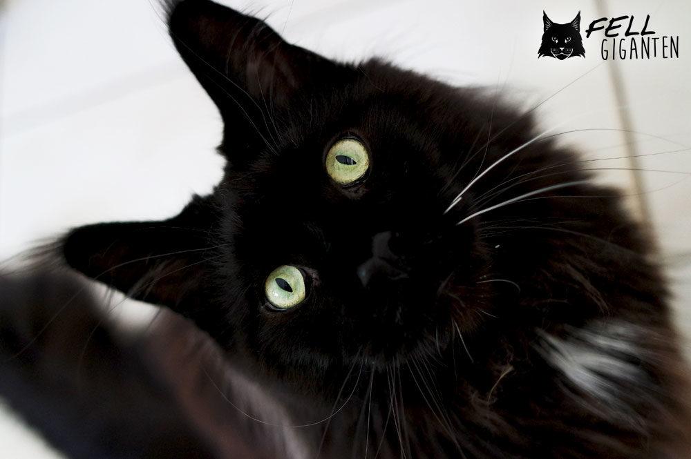 DIY Katzen Beschäftigung