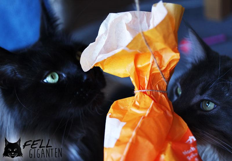 Katzen Beschäftigung - Indy und Budd checken Süielzeug ab